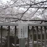 渡米から2年経って日本に対してホームシックを感じるポイント。恋しい!