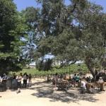 サンフランシスコから小旅行!温泉とワインが楽しめるパソロブレス(Paso Robles)