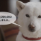 ソフトバンクはなぜ犬の散歩スタートアップWag!に300億円以上も投資したのか?